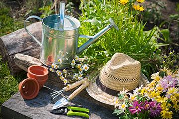 Garten Die ersten Schritte in den Frühling