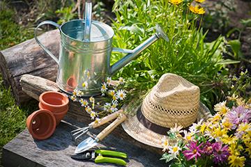 Garten Der Sommer in Ihrem Garten