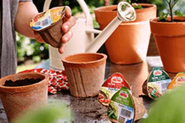 Garten Aussaat und Anzucht