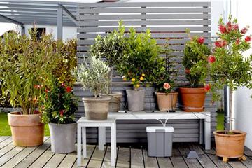 Bauen Damit Ihr Pflanzen nicht verdursten!