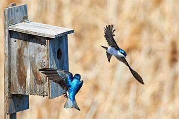 Garten Vögel füttern im Winter, Tipps und Tricks um Vögel richtig zu füttern.
