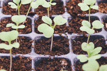 Garten Aussaat und Anzucht - Alles was Sie wissen müssen