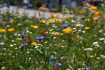 Garten Rasenpflege im Frühjahr